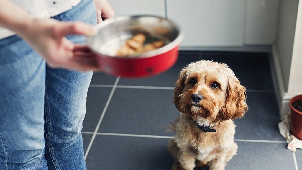 1300 kutyával él együtt a kínai nő