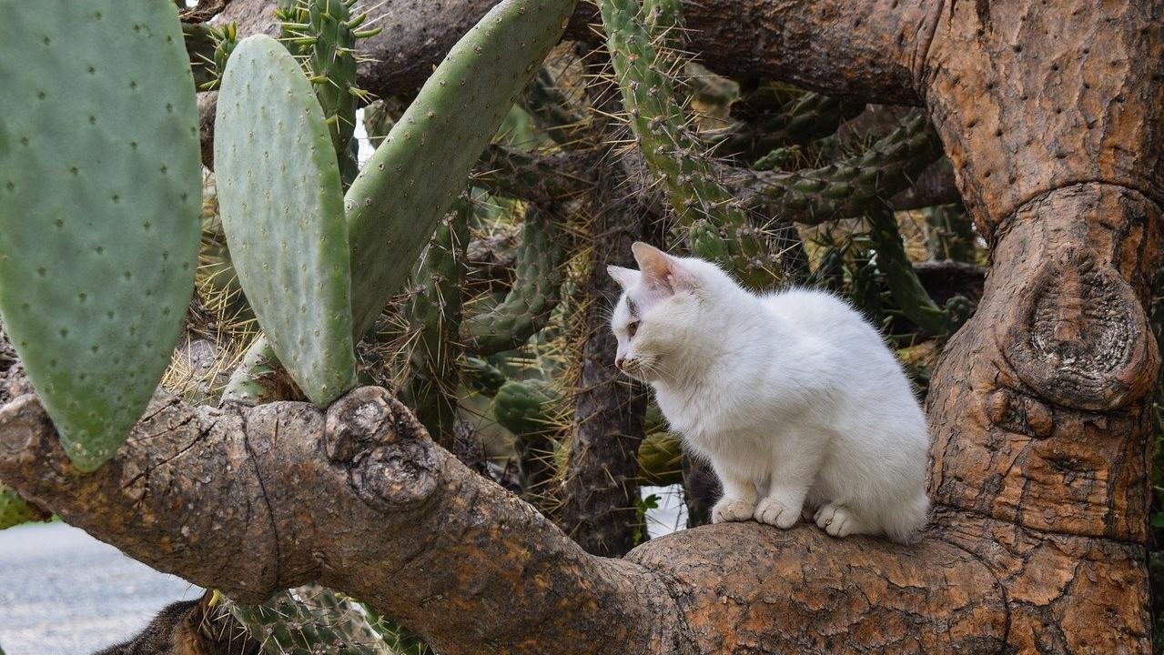 Fügekaktuszon pihent meg a macska.