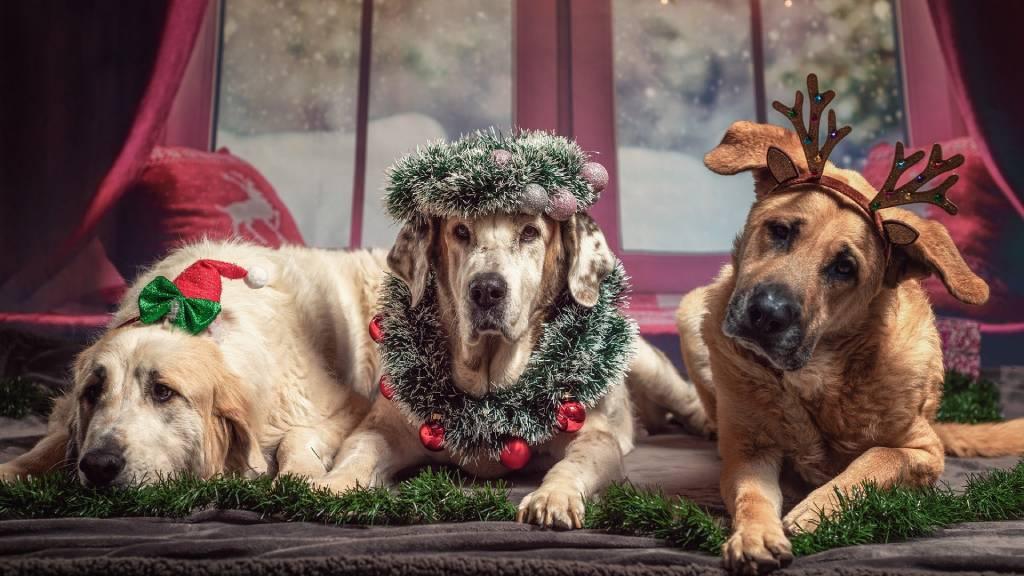 vicces karácsonyi kutyák