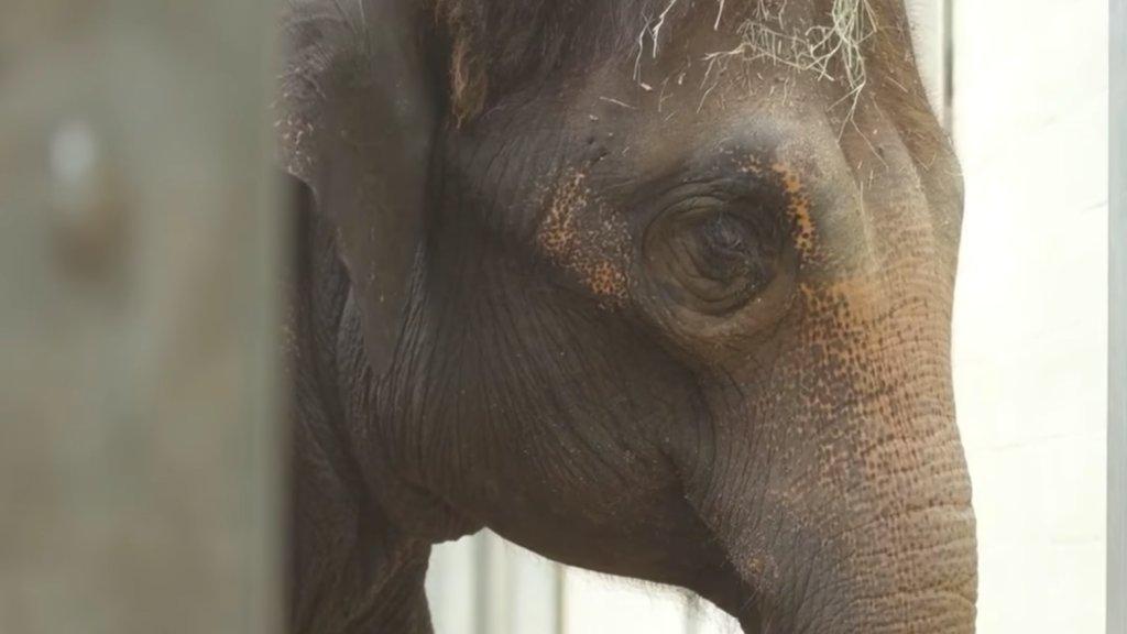 Elefánt az ultrahangon
