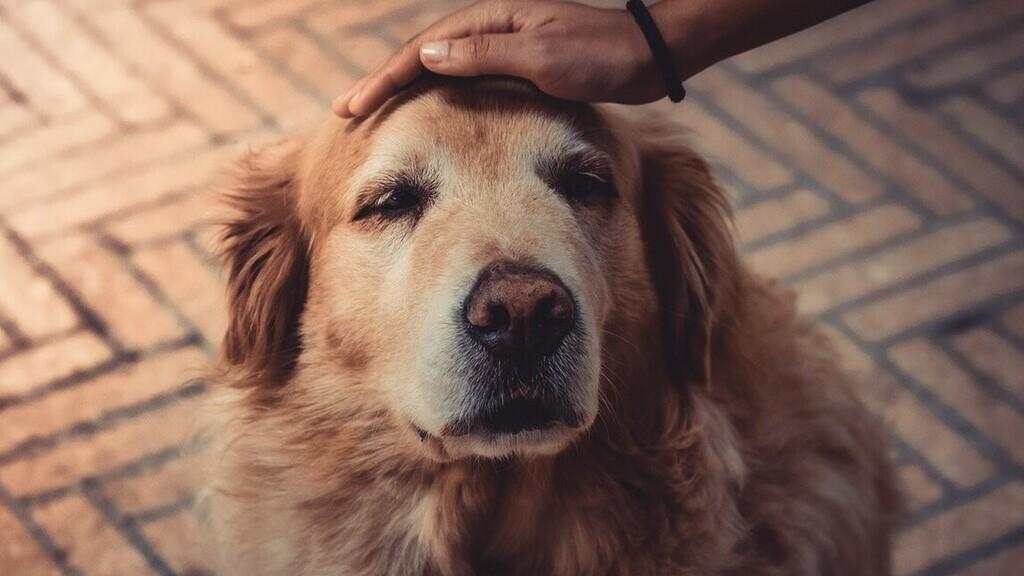 Egy kutyus napokig várta a gazdáját a kórház előtt