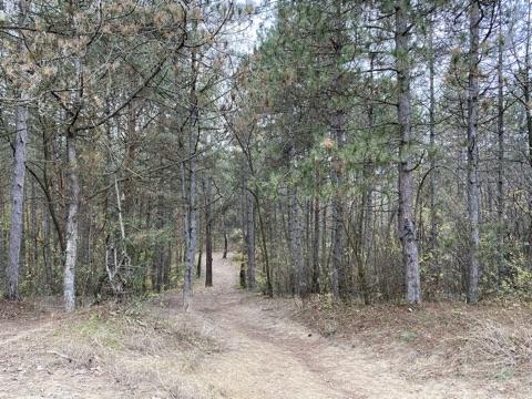 Az erdő a Szilas-patak mellett haladó Óceánárok utcától a Káposztásmegyer II. lakótelepig húzódik északi irányban.