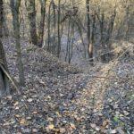 Újpest, Farkas-erdő