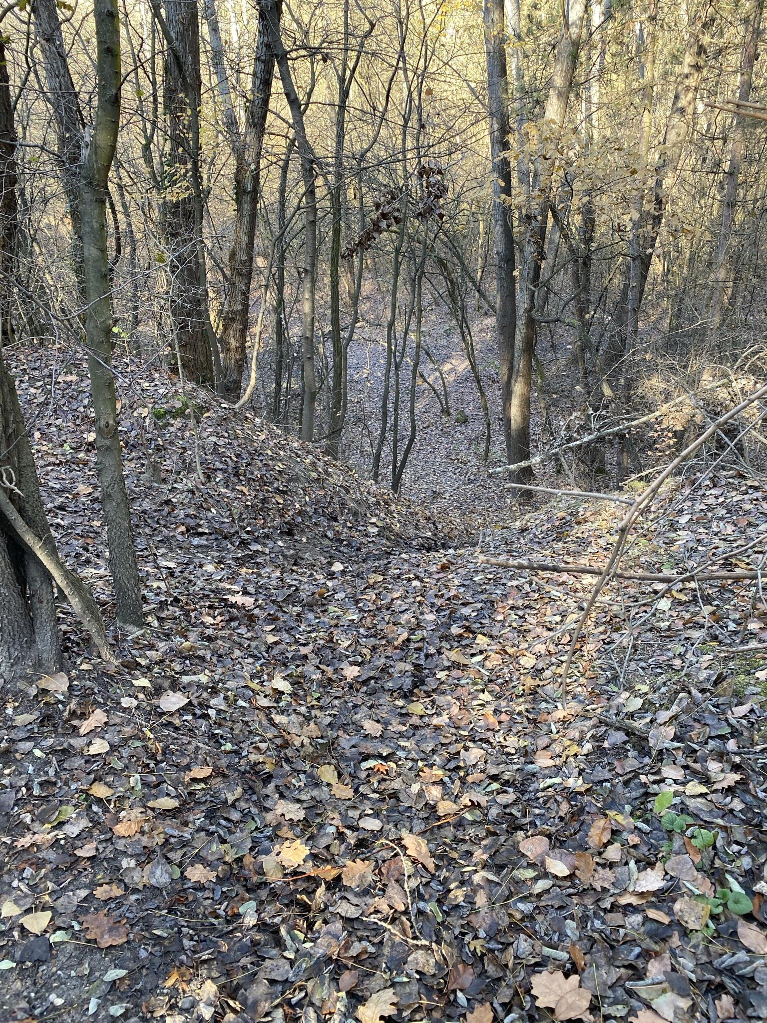Az erdőben többnyire tölgyesekből, fenyvesekből, juharokból, lepényfákból és akácosokból áll.