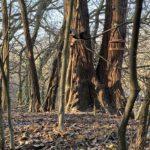 Mókus a Farkas-erdőben