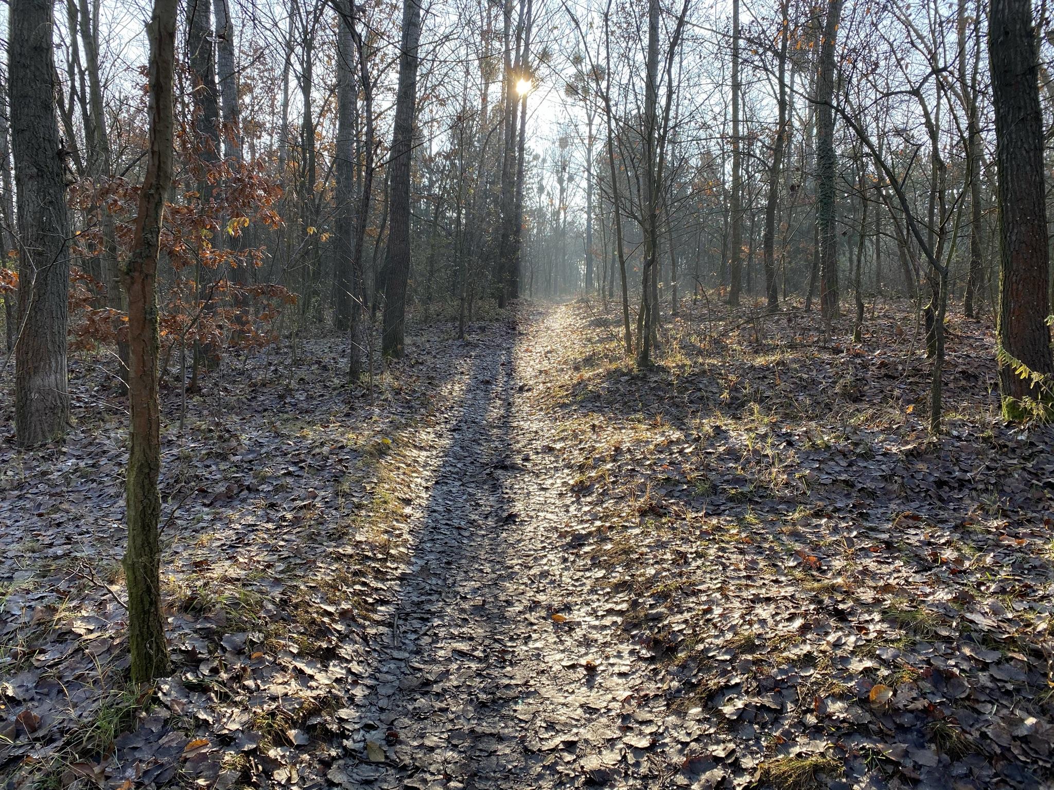 Újpest Farkaserdő