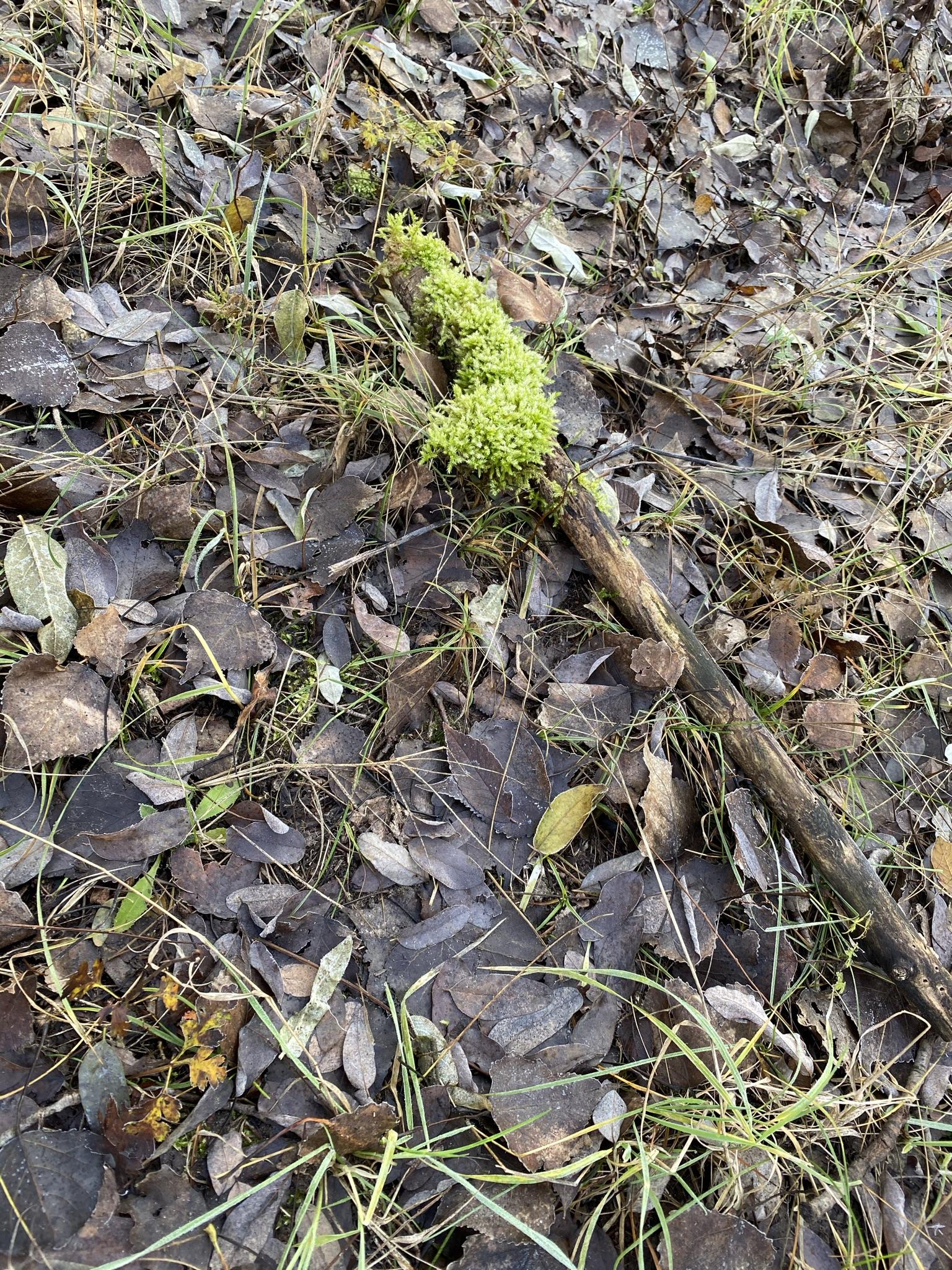 Ősszel és télen is csodálatos a Farkas-erdő.