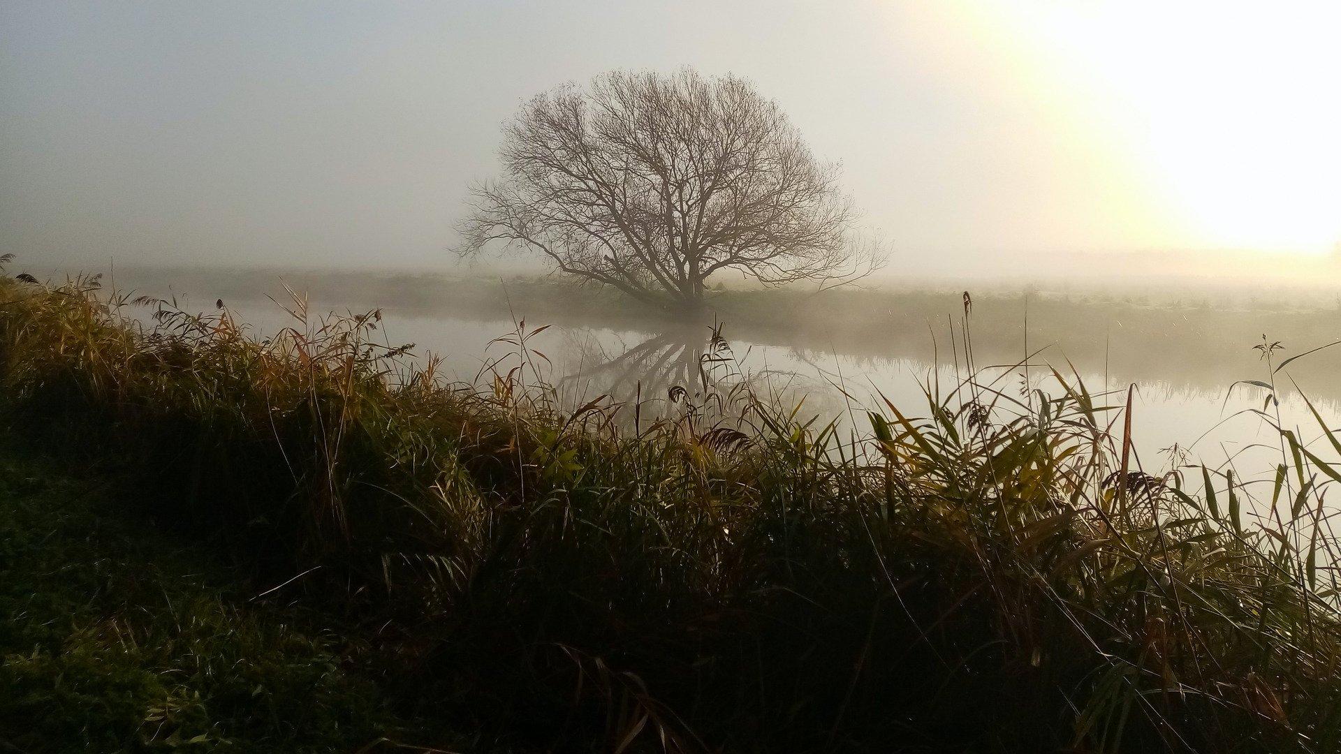 Ködös táj a tó körül
