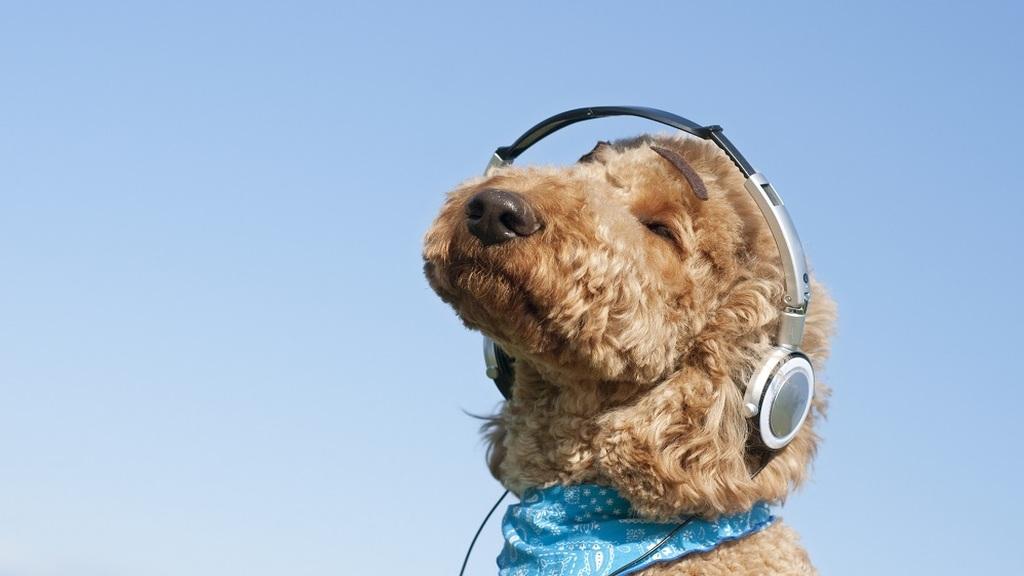 Fülhallgató tisztítása