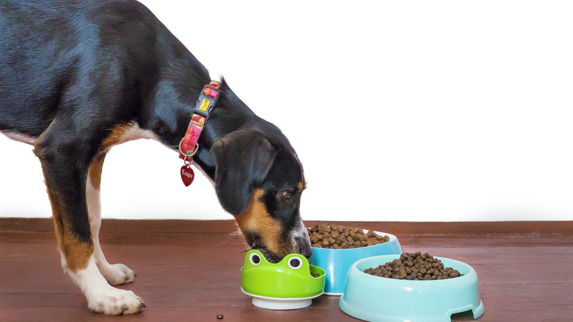 Kutya eszik a táljából