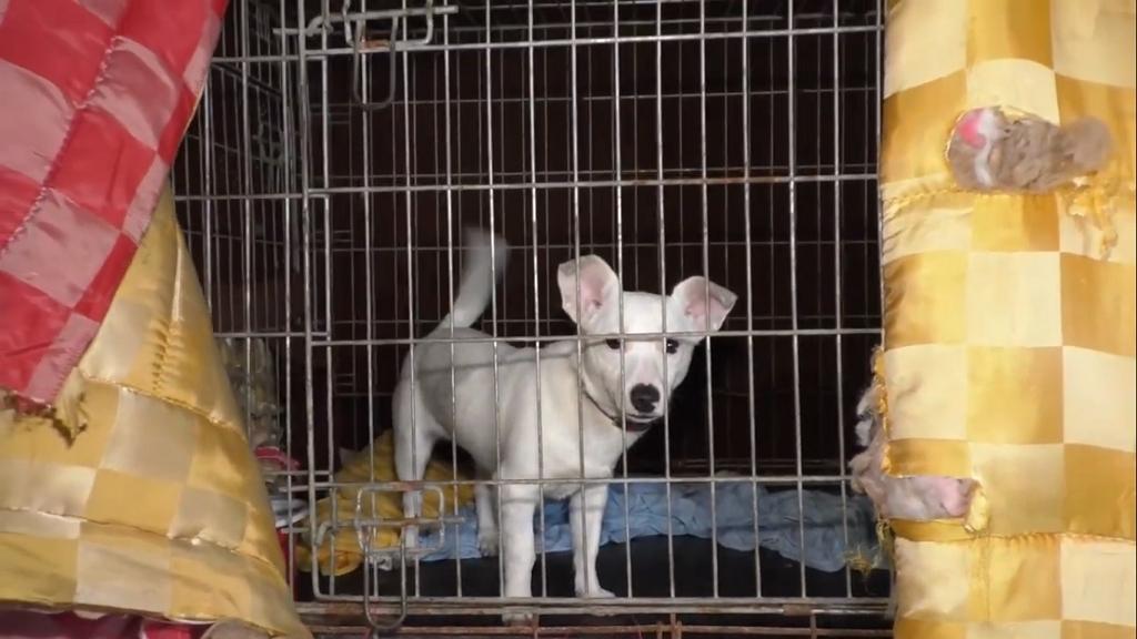 Egy szaloncukor árával segíthetsz a menhelyi kutyáknak