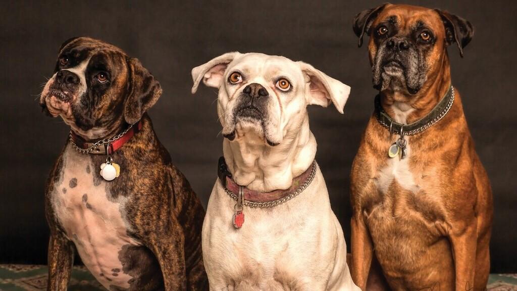 Itt a nyakörv, ami megmutatja, milyen hangulatban van a kutyád