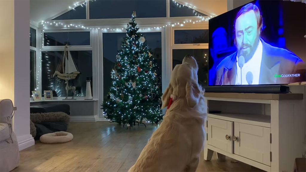 Kutya és karácsonyi dal