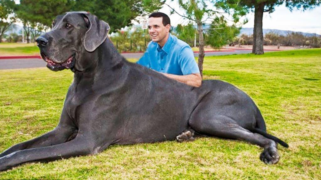 Hatalmas kutyák a világ minden tájáról