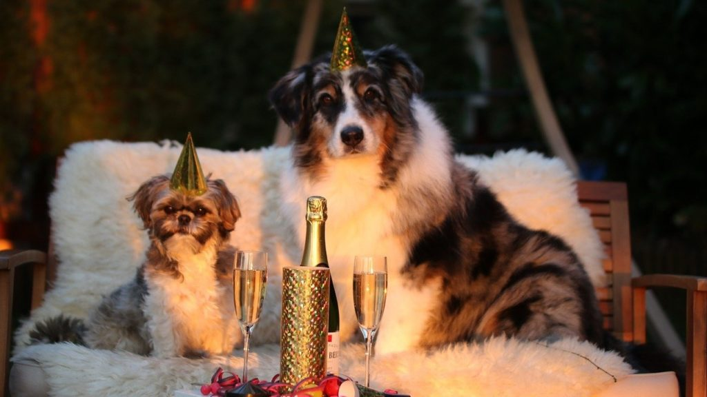 Szilveszterező kutyák