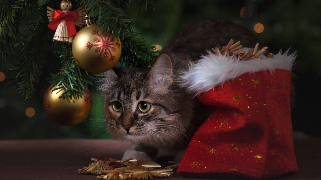 Macska a karácsonyfa alatt.