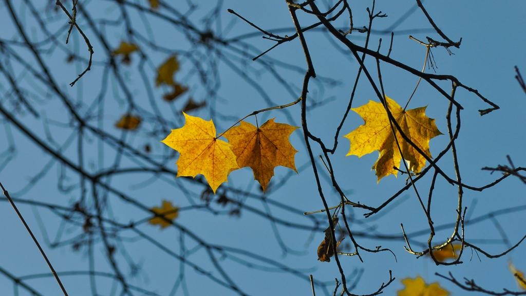 1880 óta az idei volt a legmelegebb november