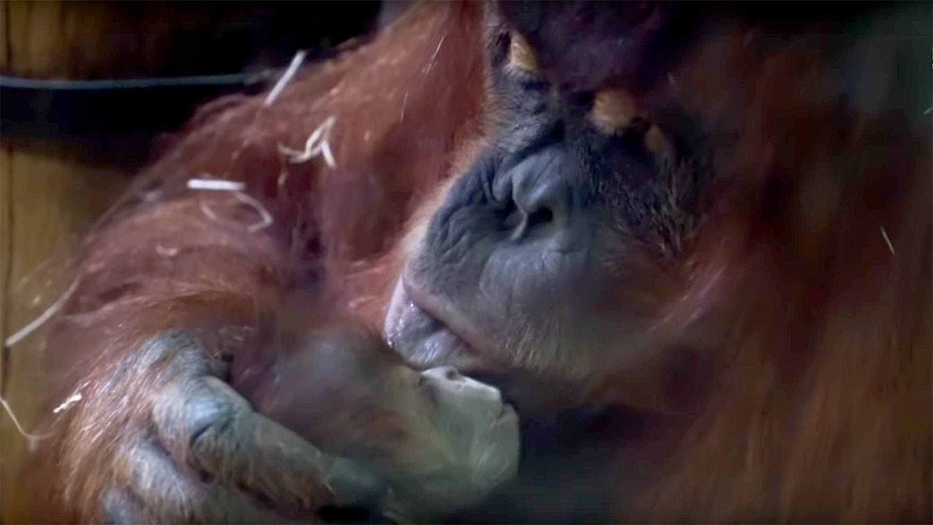 Boldog karácsonyt kíván a Budapesti Állat- és Növénykert