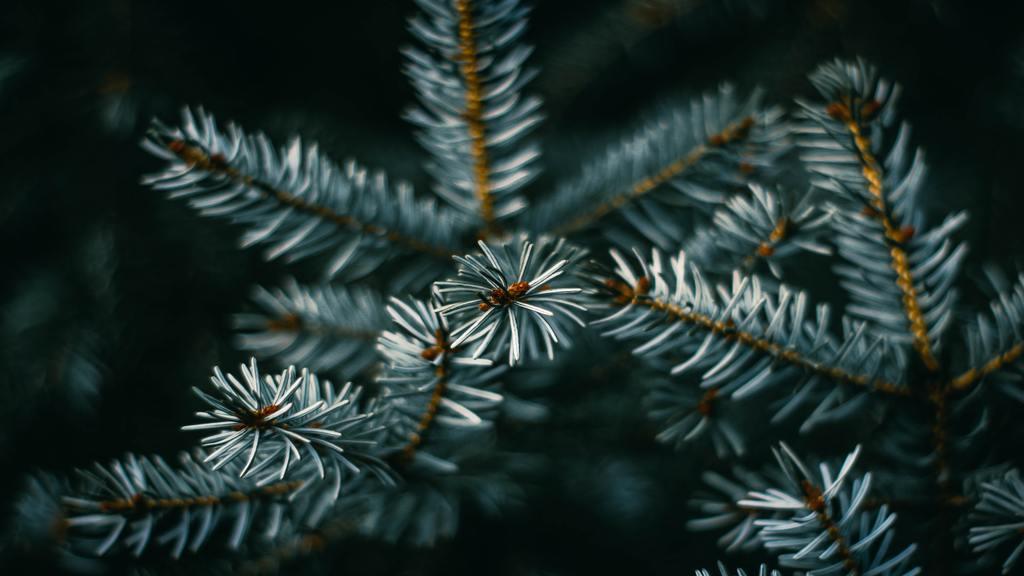 Karácsonyfák újrahasznosítása