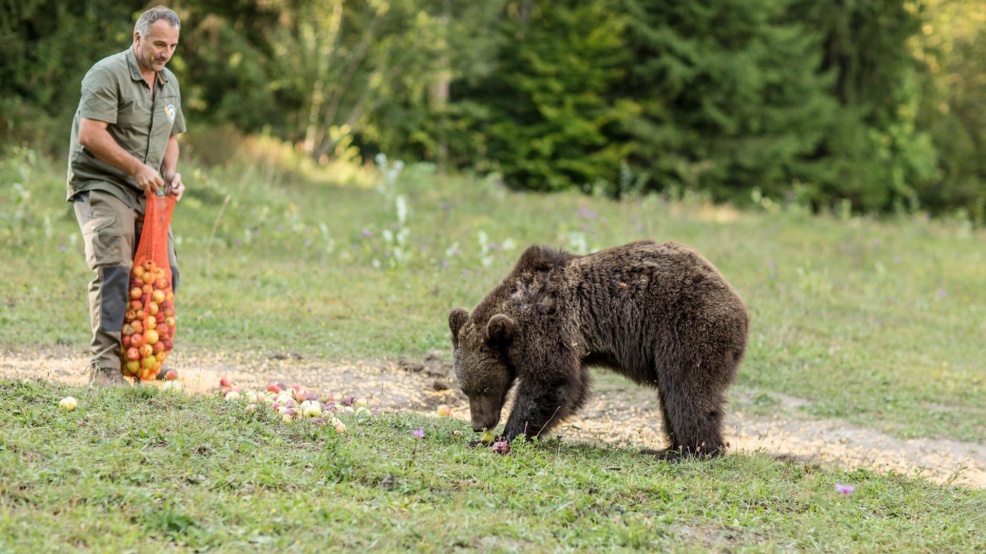 Boldogtalan multimilliomosból boldog medvepásztor