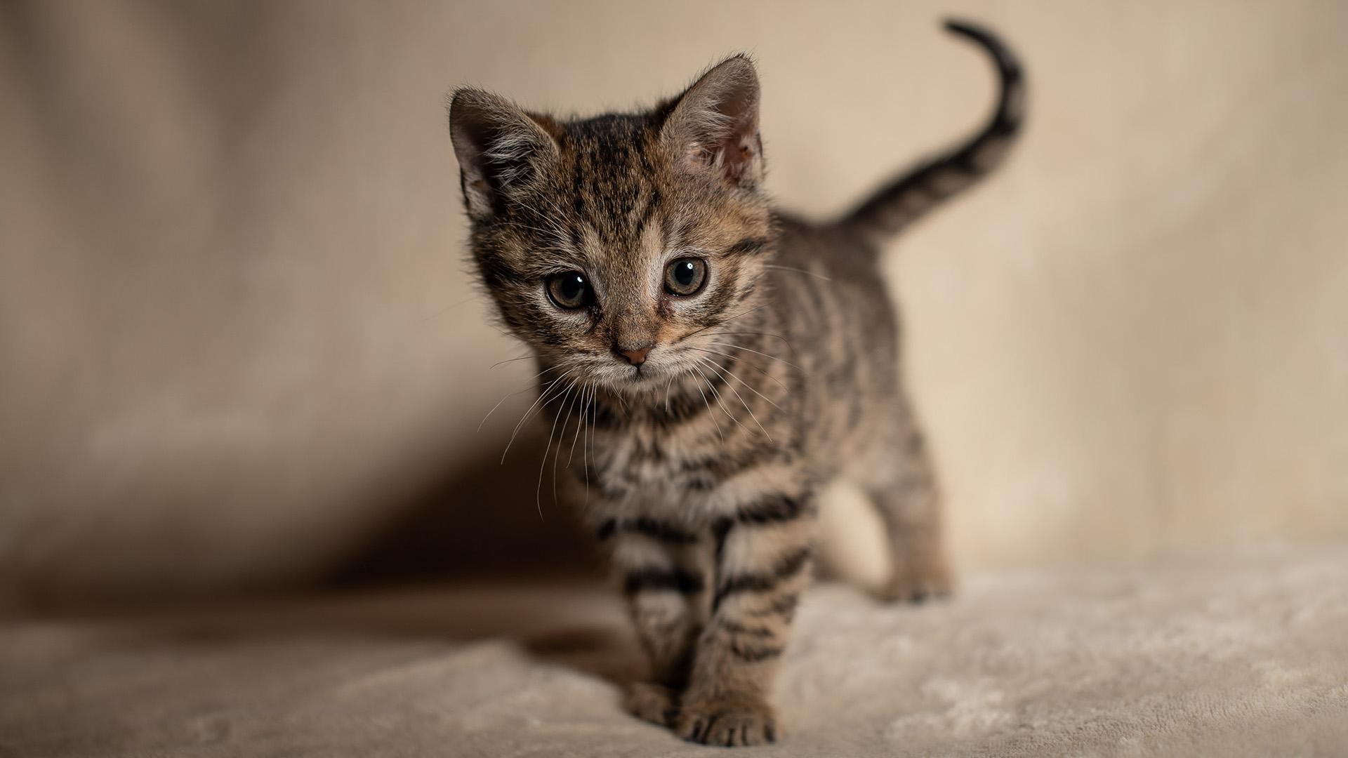 Macska örökbefogadása