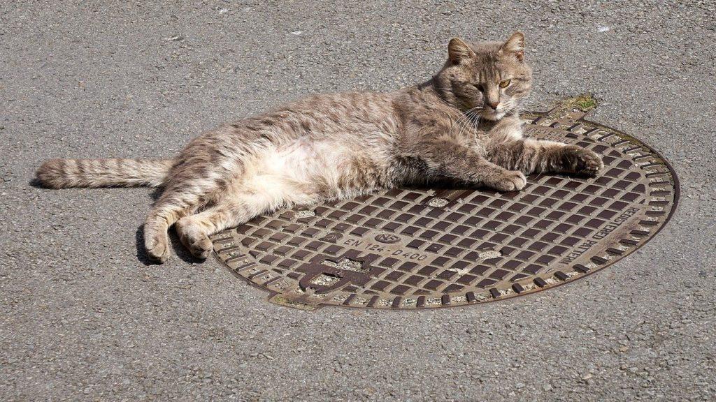 Macska fekszik a csatornafedélen.