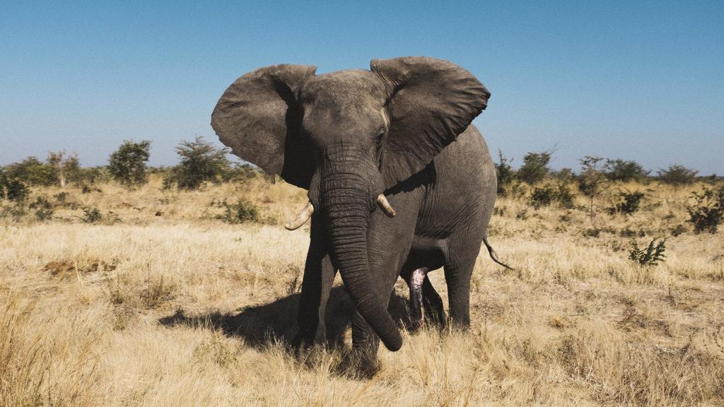 A világűrből számolták meg az elefántokat