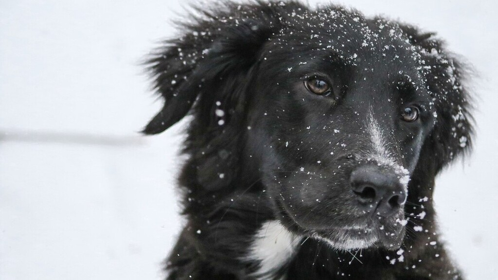 Az extrém hideg a háziállatokra is veszélyes