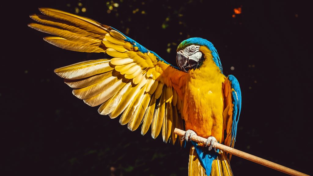 Ez a papagáj aztán tud énekelni!