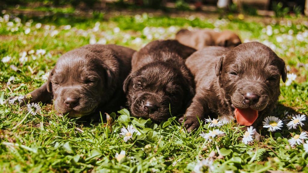 A pandémia alatt nőtt az örökbefogadási kedv, de ez nem feltétlenül jó a kutyáknak