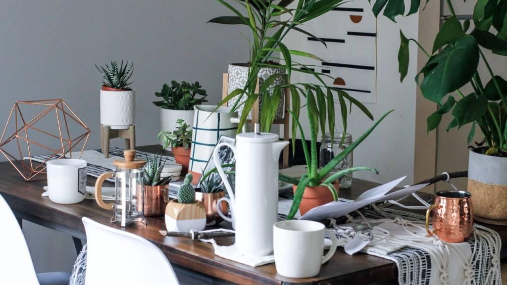 növények tárgyak rendetlenül egy asztalon