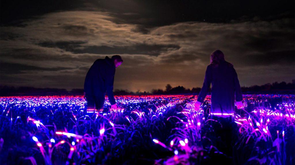 Látványos fényinstalláció serkentheti a zöldségek növekedését