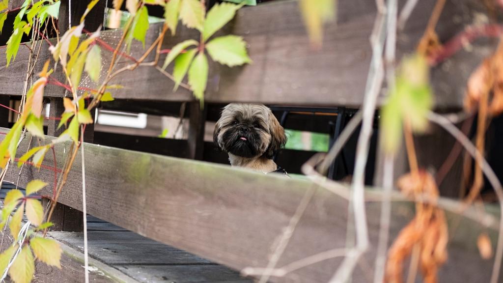 Nyolc év után lett meg az elkóborolt kutya