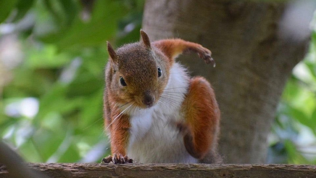 szuperhős mókus