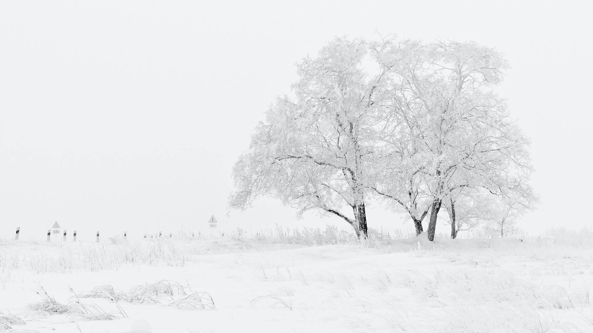 Fehér téli táj fával