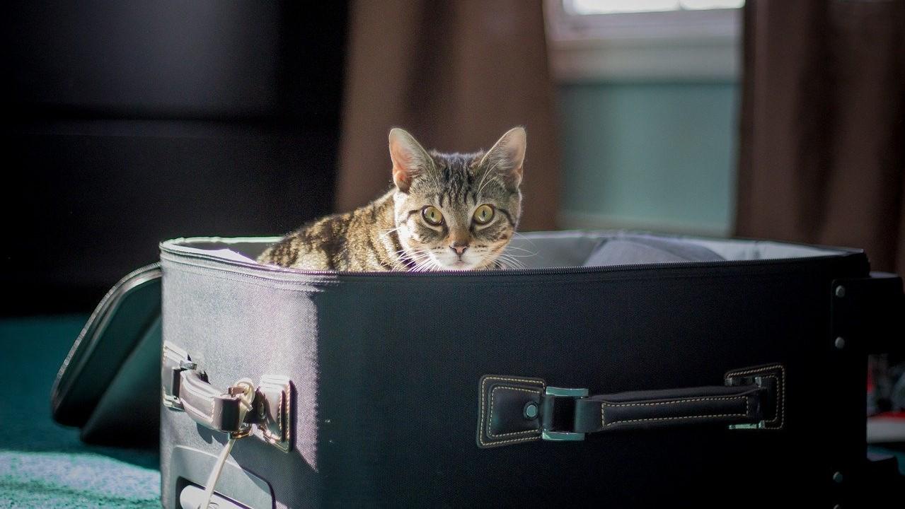 Macska a bőröndben