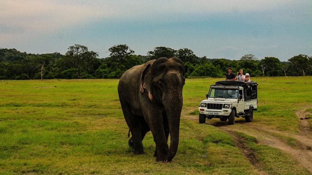 meztelenül pózolt az ázsiai elefánton az influenszer