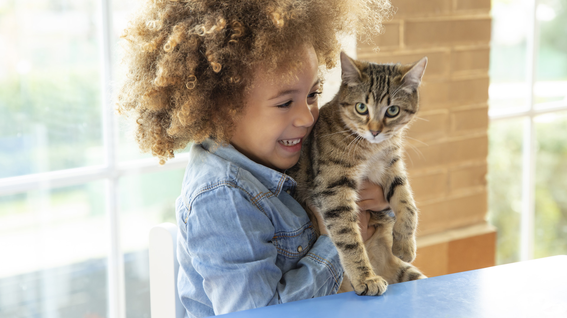 Macska kisgyerekkel