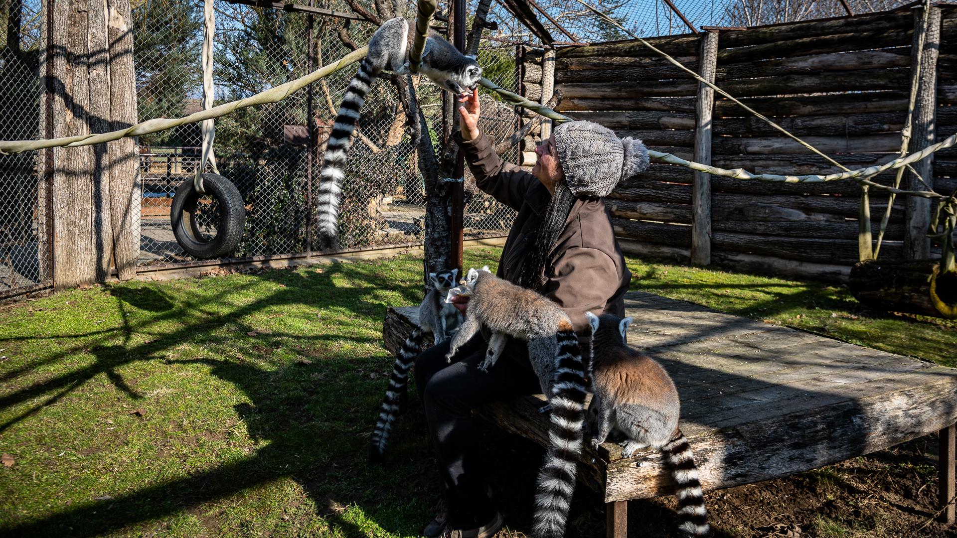 Csőd szélén a gyöngyösi állatkert