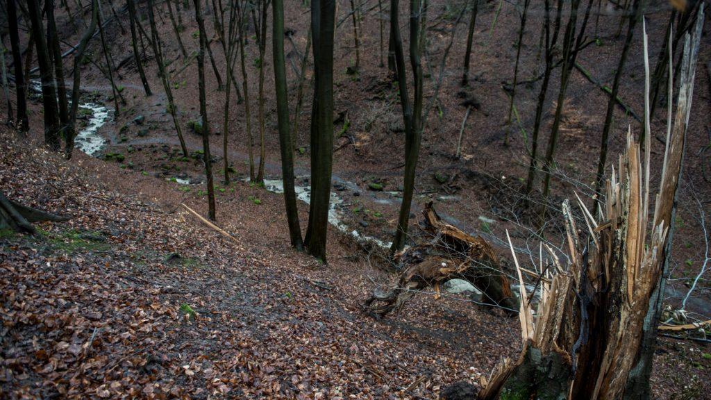 Kidőlt fa a Rám-szakadékban Dömös közelében 2015. január 10-én.
