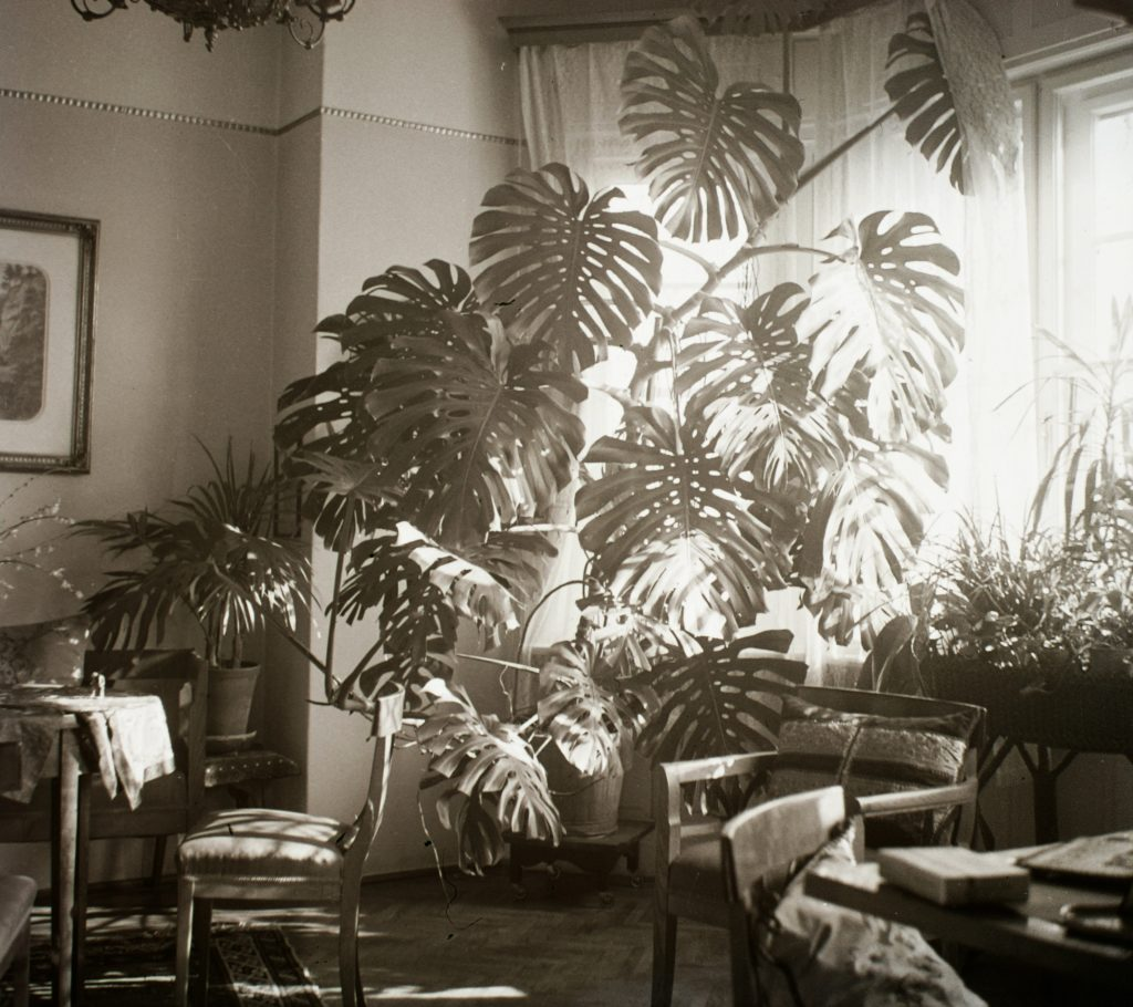 Így kerültek a növények az otthonainkba