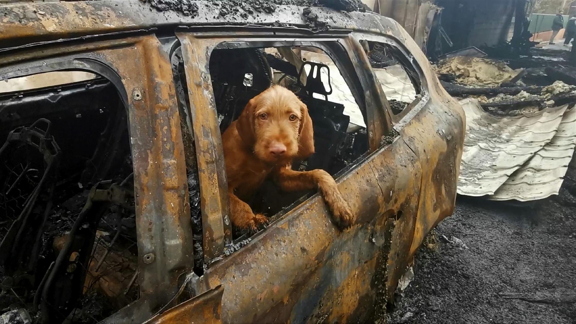 Gyufa, a tűzvizsgáló kutya