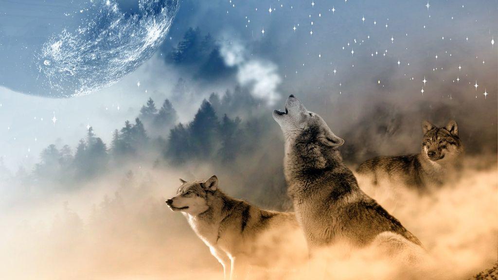 Az állatokra is hatással vannak a Hold ciklusai