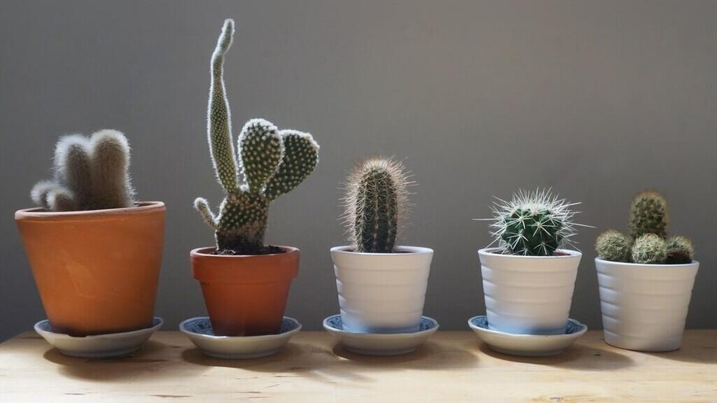 Nem lehetett kellemes kaktuszokkal a testén utazni (Illusztráció: Pexels.com)