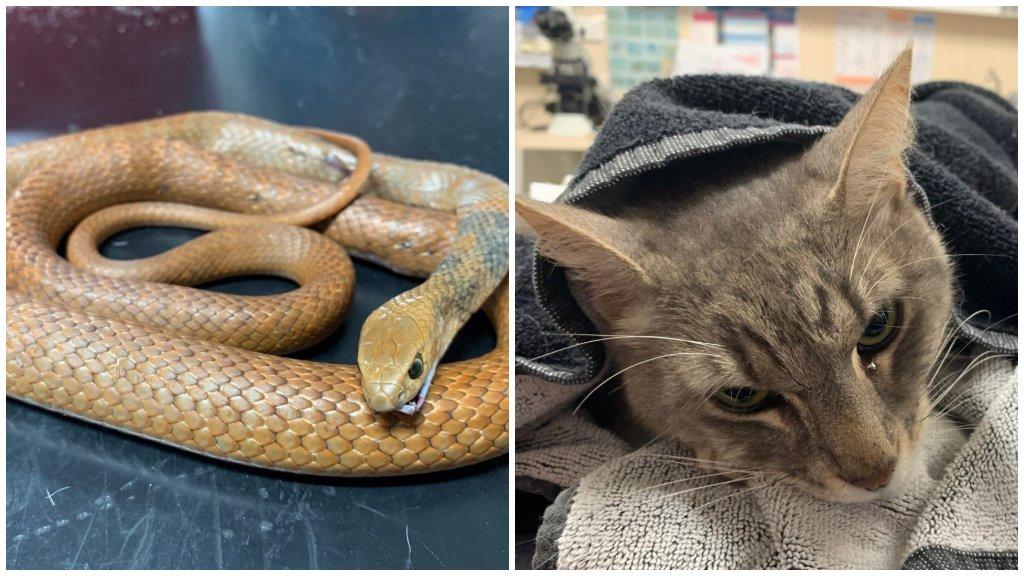Arthur, a macska, amelyik két gyereket védett meg a mérges kígyótól