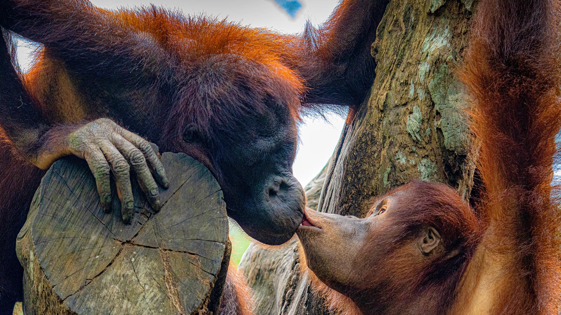 Szupercuki Valentin napi videóval jelentkezett az Állatkert