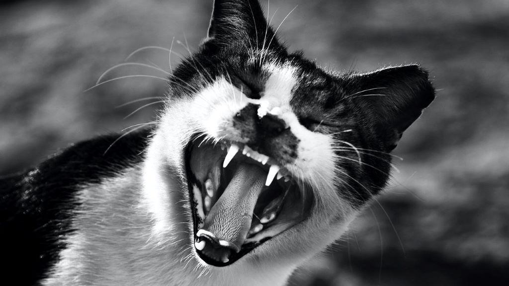 cica, stressz, karantén