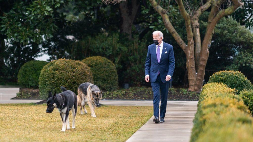 Joe Biden és két kutyája, Major és Champ a Fehér Ház kertjében.