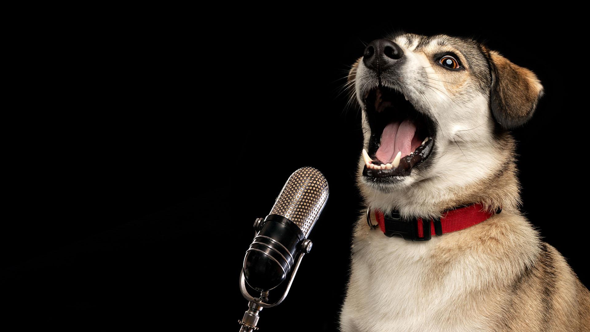 A Csillagok háborúja zenéjét énekli a cuki kutyus