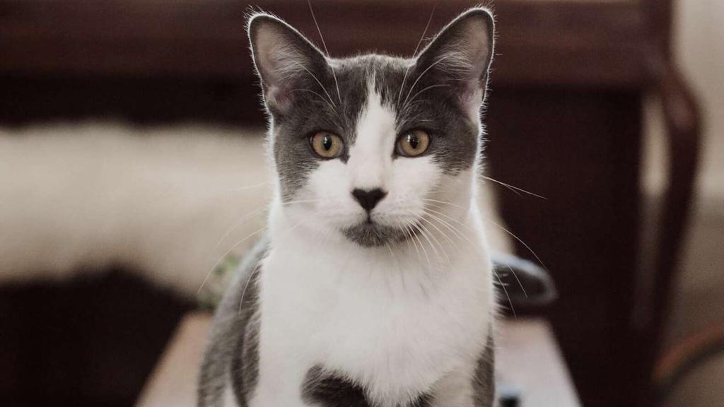 River, a szívekkel borított macska